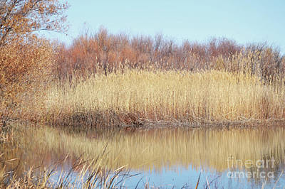 Photograph - New Mexico Bosque Lake Trees Landscape by Andrea Hazel Ihlefeld