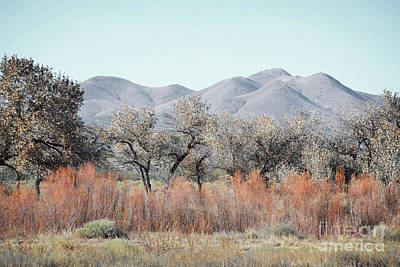 New Mexico Bosque Mountains Landscape Art Print by Andrea Hazel Ihlefeld