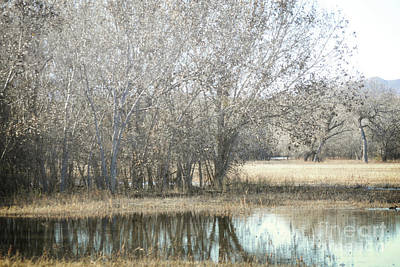 New Mexico Bosque Trees Lake Forest Landscape  Art Print by Andrea Hazel Ihlefeld