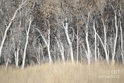 New Mexico Bosque Woodland Trees Landscape Art Print by Andrea Hazel Ihlefeld