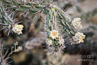 Photograph - New Mexico Cactus Flower Branch by Andrea Hazel Ihlefeld