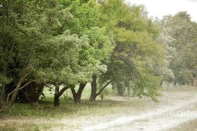 Photograph - New Mexico Country Road Farm Trees Landscape by Andrea Hazel Ihlefeld