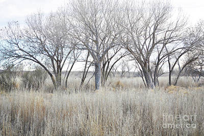 Art Print featuring the photograph New Mexico Desert Tree Field by Andrea Hazel Ihlefeld