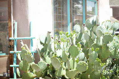 Photograph - New Mexico Dreamy Cactus Window by Andrea Hazel Ihlefeld