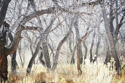 Photograph - New Mexico Dreamy Jemez Woodland by Andrea Hazel Ihlefeld