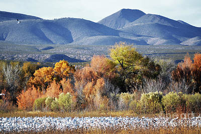 Photograph - New Mexico Fall Foliage Lake Mountains Landscape by Andrea Hazel Ihlefeld