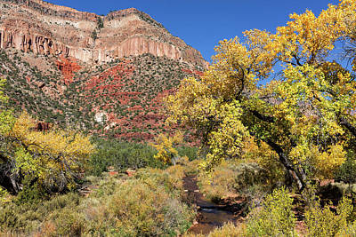 Photograph - New Mexico Fall by Kathleen Bishop