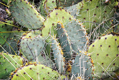 Photograph - New Mexico Green Cactus Landscape by Andrea Hazel Ihlefeld