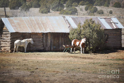 Photograph - New Mexico Horse Farm Landscape by Andrea Hazel Ihlefeld