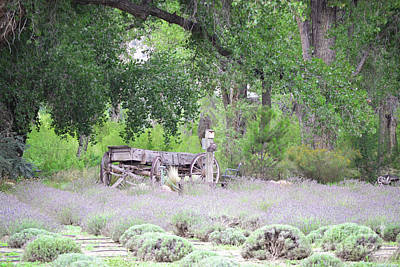 Photograph - New Mexico Lavender Farm Wagon Trees Landscape by Andrea Hazel Ihlefeld
