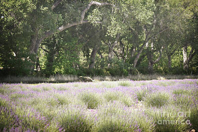 Photograph - New Mexico Lavender Field Woodland by Andrea Hazel Ihlefeld