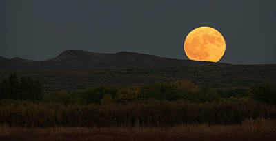 New Mexico Moonrise Art Print by Loree Johnson