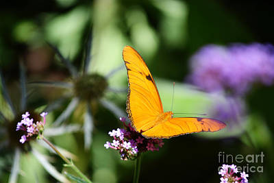 Photograph - New Mexico Orange Butterfly Landscape by Andrea Hazel Ihlefeld