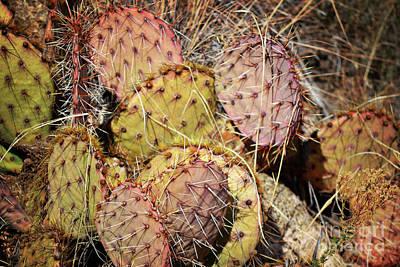 New Mexico Prickly Pear Cactus Art Print