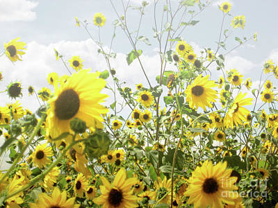 Art Print featuring the photograph New Mexico Sunflowers by Andrea Hazel Ihlefeld
