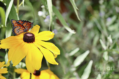 Photograph - New Mexico Twin Butterflies Yellow Flowers by Andrea Hazel Ihlefeld