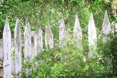 Photograph - New Mexico White Picket Fence Woodland Landscape by Andrea Hazel Ihlefeld