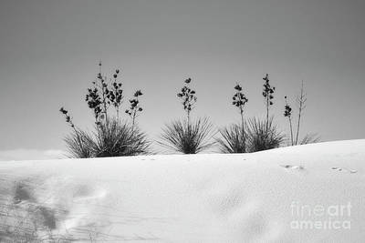 Photograph - New Mexico White Sands Dunes Landscape by Andrea Hazel Ihlefeld