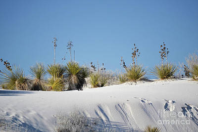 Photograph - New Mexico White Sands Landscape by Andrea Hazel Ihlefeld