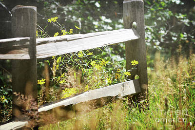 Photograph - New Mexico Wildflower Fence Landscape by Andrea Hazel Ihlefeld