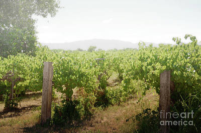 Photograph - New Mexico Winery Landscape by Andrea Hazel Ihlefeld