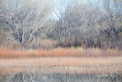 New Mexico Woodland Birds Lake Art Print by Andrea Hazel Ihlefeld