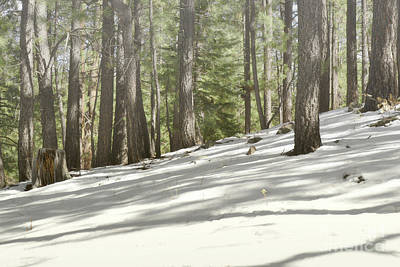 Photograph - New Mexico Woodland Snow by Andrea Hazel Ihlefeld