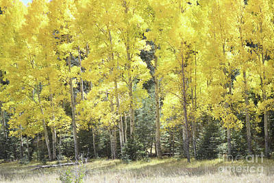 Photograph - New Mexico Yellow Aspen Trees Woodland by Andrea Hazel Ihlefeld