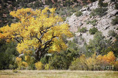 Photograph - New Mexico Yellow Desert Tree by Andrea Hazel Ihlefeld