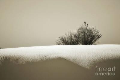 Photograph - New Mexico Yucca Plant Dune Landscape by Andrea Hazel Ihlefeld