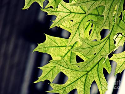 Photograph - New Oak Leaves    by Sarah Loft