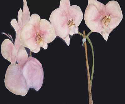 Painting - New Orchids by Vickie G Buccini