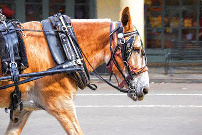 Photograph - New Orleans Carriage Mule by Alice Gipson