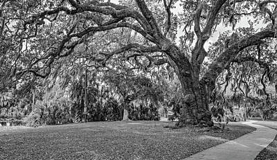 Path Photograph - New Orleans City Park Path 3 Bw by Steve Harrington