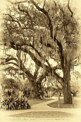 Water Droplets Sharon Johnstone - New Orleans City Park - Sepia by Steve Harrington