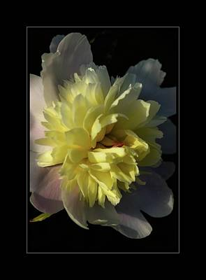 Photograph - New Peony In The Garden by Sherman Perry