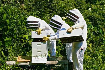 Photograph - New Pond Farm Beekeepers by Polly Castor