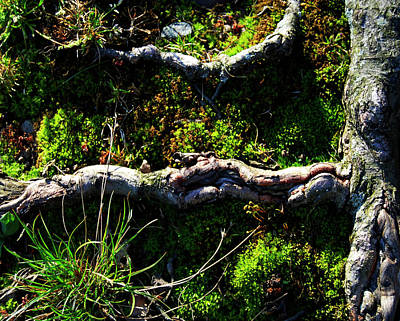 Photograph - New Shoots, Old Roots by Roger Bester