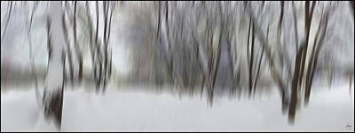 Photograph - New Snow In A Floodplain Forest by Wayne King