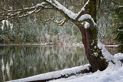Photograph - New Snow by Randy Hall