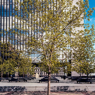 Photograph - Trees On Fed Plaza by Mike Evangelist