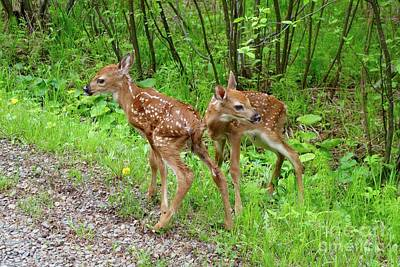 Photograph - New Twins by Sandra Updyke