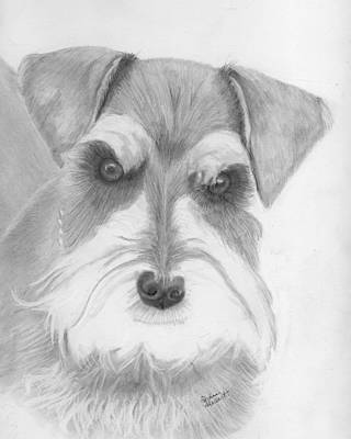 Schnauzer Drawing - Mr. Parker by Diane Holbert