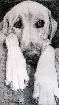 Animals Drawings - Baxter Ponders his Next Move by Lorraine Zaloom