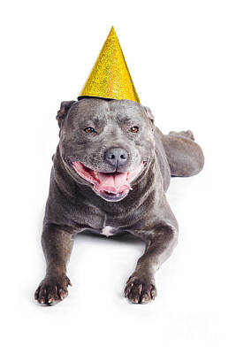 New Year Dog With Party Hat Art Print by Jorgo Photography - Wall Art Gallery