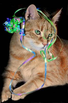 Photograph - Celebration Cat by Diana Angstadt
