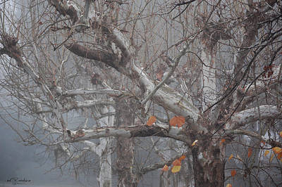 Photograph - New Years Day Foggy Tree by rd Erickson