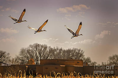 Photograph - Flight Of The Cranes by Susan Warren