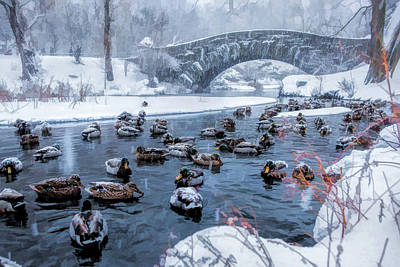 Painting - New York City Central Park Winter Ducks by Christopher Arndt