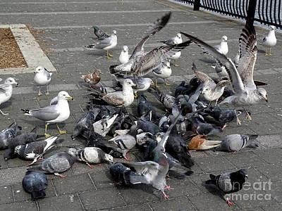 Photograph - New York City Pigeons # 5 by Ed Weidman